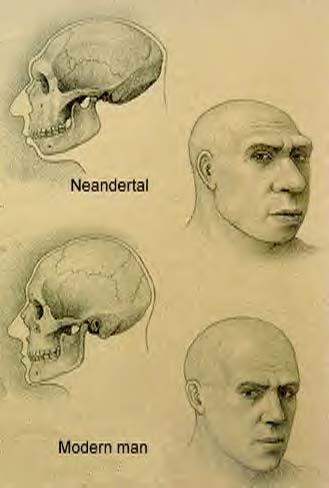 neanderthal_modern-man